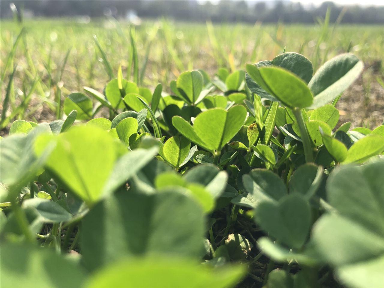 春茶开采期已至 检测仪器助力提升茶叶品质